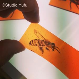 170928ミツバチ